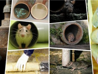 Rodent Tracking